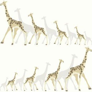 Dwell Studio Baby and Kids Giraffes Brown and Black Wallpaper