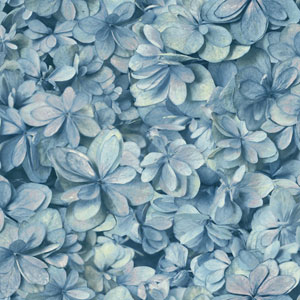 Outdoors In Hydrangea Bloom Blue Wallpaper