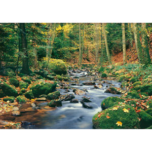 Multicolor Forest Stream Wall Mural