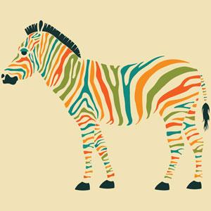 Zebra by Jazzberry Blue: 18 x 18-Inch Canvas Print