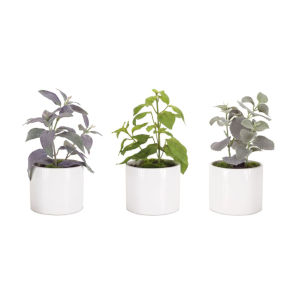 White and Green Five-Inch Potted Herb Succulents, Set of 3