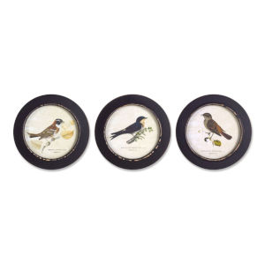 Black and Multicolor 10-Inch Framed Bird Print, Set of 3