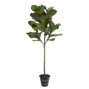 Green and Brown 22-Inch Potted Fiddle Leaf Fig