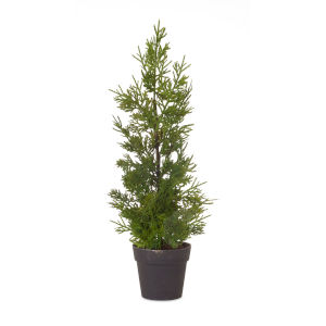 Green and Black Potted Pine Tree, Set of 6