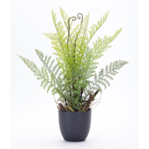 Green and Brown Fern Potted, Set of 2