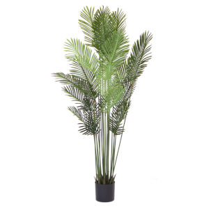 Green and Brown Palm Tree Potted