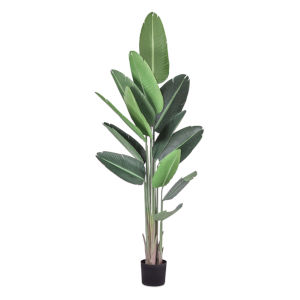 Green and Black Banana Lead Potted