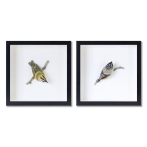 Black and White Bird Shadow Box, Set of 2