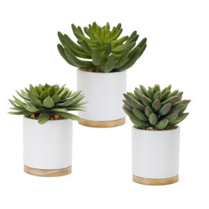 Green and Brown Succulent Potted, Set of 3