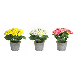 Potted Daisies, Set of Three