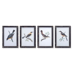 Framed Bird Print, Set of Four