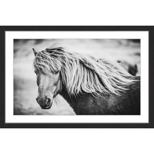 Beautiful Mane 30 x 20 In. Framed Painting Print