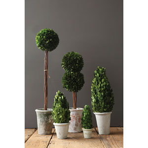 Boxwood Single Ball Topiary with Stem in Clay Pot