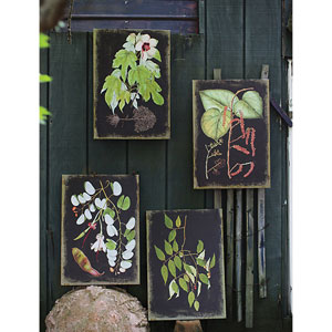 Canvas Wall Print with Botanicals, Set of Four