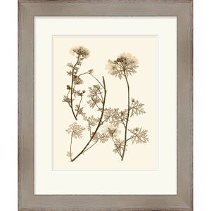 Sepia Nature Study IV by Vision Studio 24 x 29-Inch Botanical and Floral Wall Art