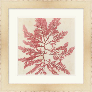 Brilliant Seaweed I by Vision Studio 24 x 24-Inch Animal and Nature Wall Art