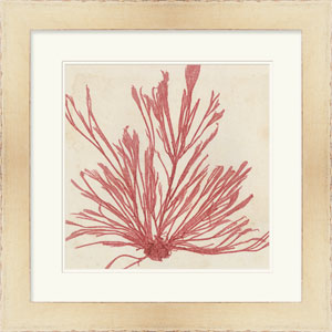 Brilliant Seaweed IX by Vision Studio 24 x 24-Inch Animal and Nature Wall Art