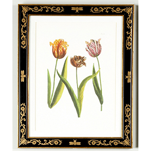 Black and Gold Tulip 988 Print