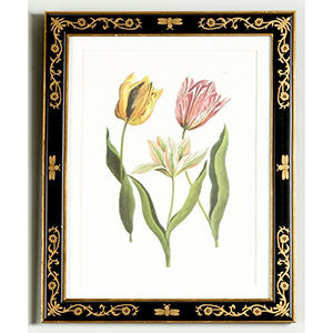 Black and Gold Tulip 991 Print