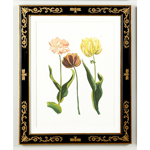 Black and Gold Tulip 985 Print