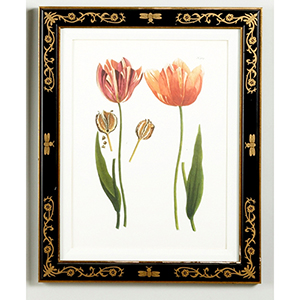 Black and Gold Tulip 989 Print