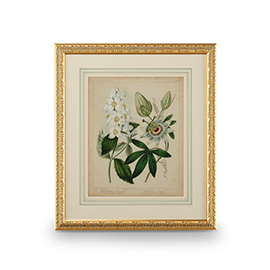 Gold Cottage Florals II Print