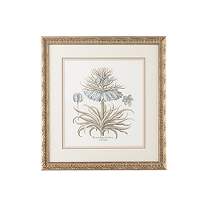 Silver Besler Botanical in Blue I Print