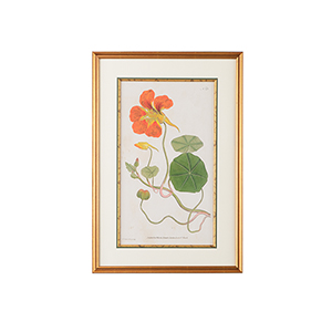 Mount Vernon Gold Botanical Plate Number 23 Print