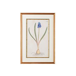 Mount Vernon Gold Botanical Plate Number 157 Print