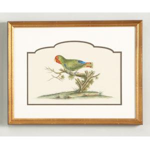 Gold Guinea Parakeet Wall Art