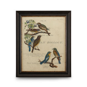 Distressed Brown with Gold Vintage Ornithology I Wall Art