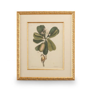 Gold Catesby Bird and Botanical III Wall Art