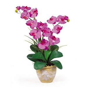 Double Stem Phalaenopsis Silk Orchid Arrangement