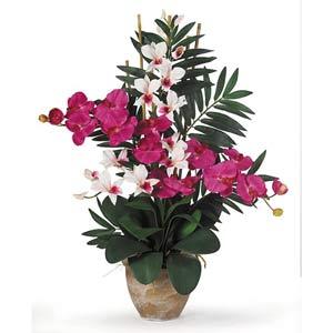 Double Phal/Dendrobium