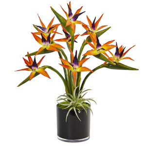 Bird of Paradise in Black Glossy Cylinder