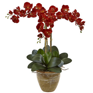 Triple Stem Phalaenopsis Arrangement Seasonal
