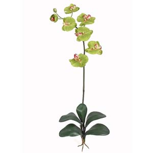 Phalaenopsis Silk Orchid Flower with Leaves (6 Stems)
