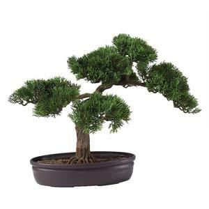 16-Inch Cedar Bonsai