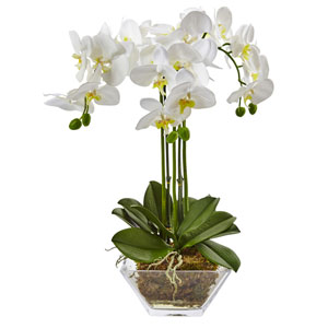 Triple Phalaenopsis Orchid in Glass Vase
