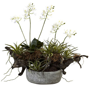 White Orchid and Succulent Garden with Driftwood and Decorative Vase