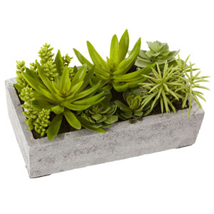 Green Succulent Garden with Concrete Planter