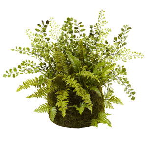 Green Mixed Fern with Twig and Moss Basket