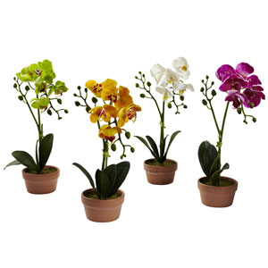 Multicolor Phalaenopsis Orchid with Clay Vase, Set of Four