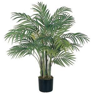 Areca Silk Palm Tree - 3 Feet