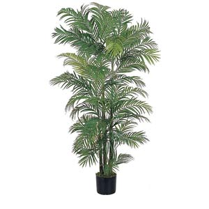 Areca Silk Palm Tree - 6 Feet