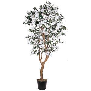 Dogwood Silk Tree - 5 Feet