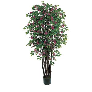 Bougainvillea Silk Tree - 6 Feet