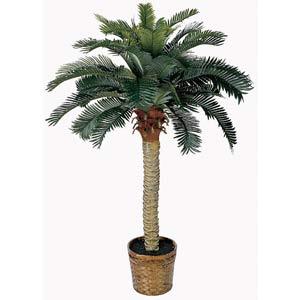 Sago Silk Palm Tree - 4 Feet