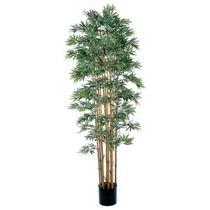 Bamboo Japanica Silk Tree - 7 Feet