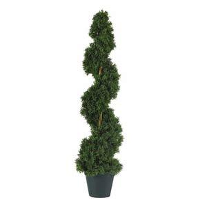 Cedar Spiral Silk Tree - 3 Feet